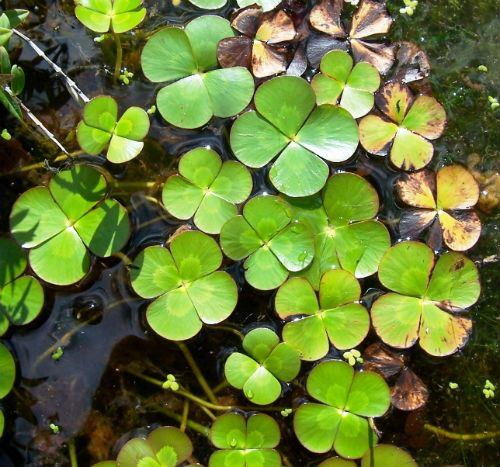 Australian Plants Society Nsw Plant Database